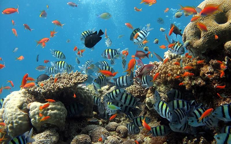 Khám phá đại dương bao la khi đến khu vui chơi vinpearl nha trang