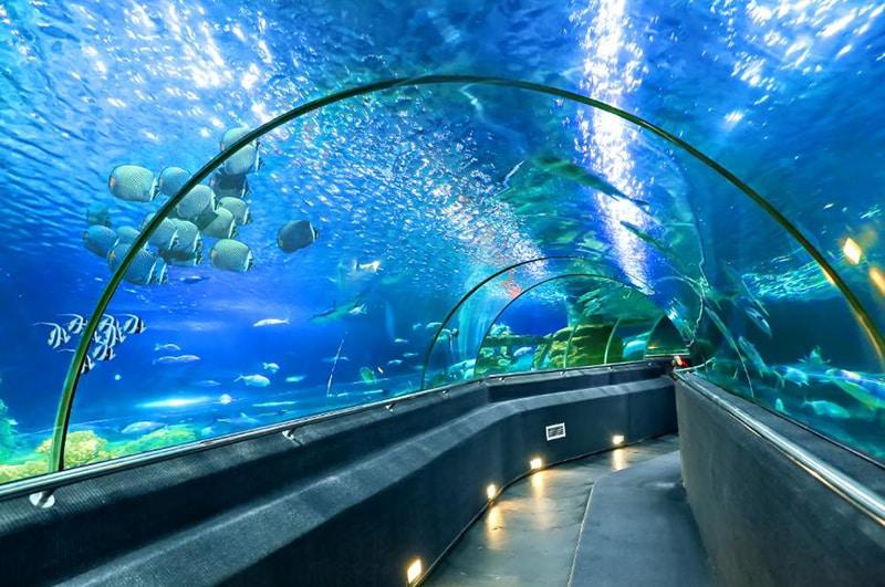 Bản đồ vinpearl nha trang - Đi ngắm cá trong hầm thủy cung