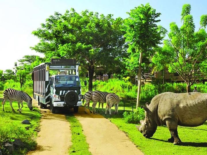 Tận mắt chiêm ngưỡn những loài động vật hoang dã ở cụ ly gần - trải nghiệm chỉ có tại Vinpearl Safari Phú Quốc