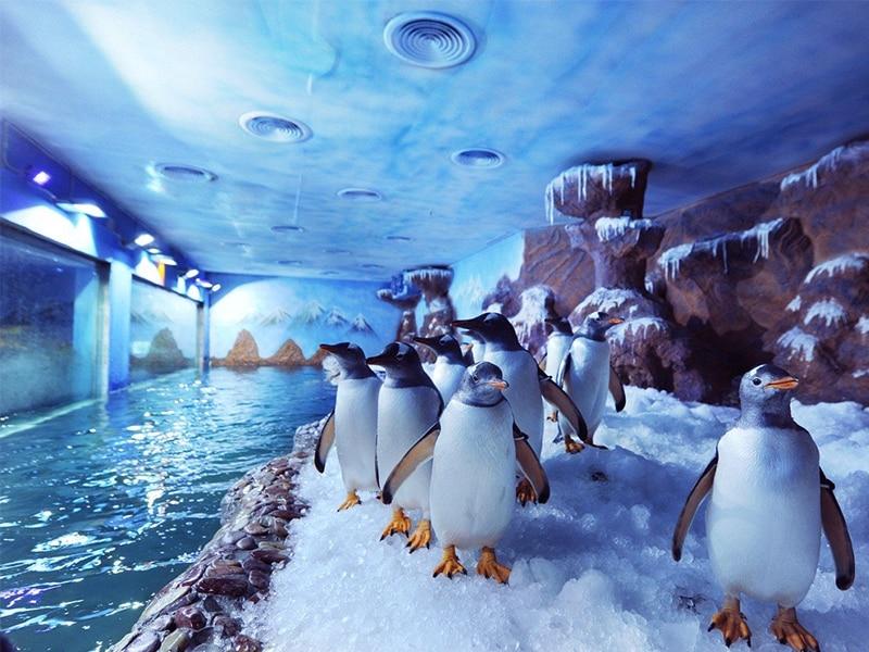 """Vinpearl Land Phú Quốc có gì chơi - Chiêm ngưỡng Gentoo """"vua tốc độ"""" của loài chim cánh cụt"""