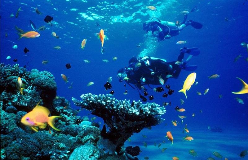 Khám phá đại dương tại đảo Hòn Mun - những địa điểm du lịch ở nha trang