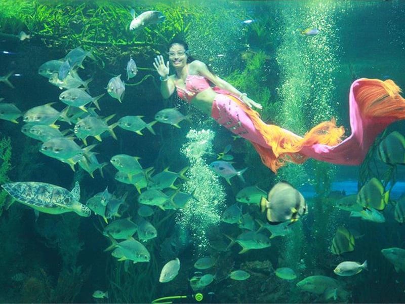 Nghệ thuật biểu diễn ghệ thuật dươi nước là một trong những điểm nhấn tại Thủy cung Phú Quốc Vinpearl Land