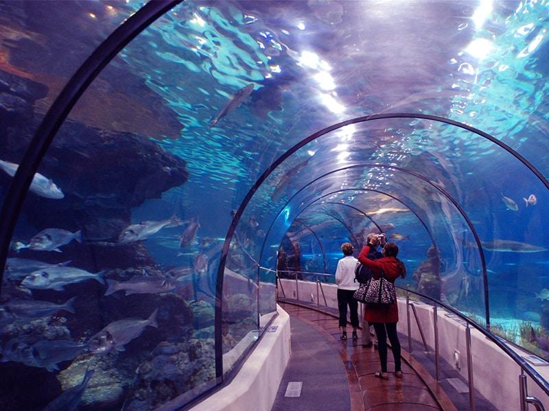 Vinpearl Land Phú Quốc có gì chơi - Khám phá thế giới động vật dưới đáy đại dương