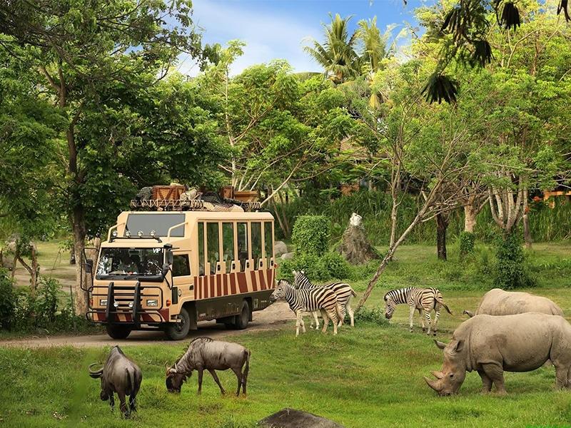 Vinpearl Safari Phú Quốc có gì ? Thiên đường động vật hoang dã muôn sắc màu từ Á sang Âu, từ Mỹ sang Phi