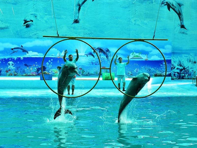 Vinpearl Safari Phú Quốc có gì ? - Xiếc cá heo là một trong những tiết mục được mong chờ nhất