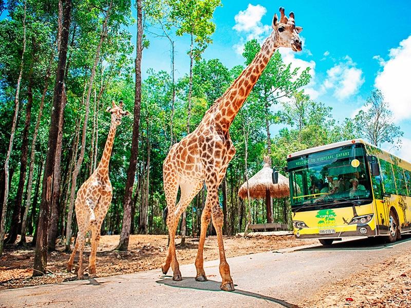 Đồng thời Vé Vinpearl Safari cũng được miễn phí hoàn toàn cho bạn khi ở tại Biệt thự Vinpearl Phú Quốc.