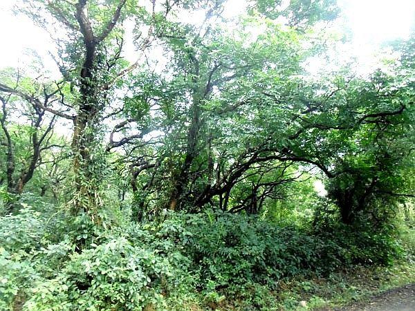 Khu bảo tồn thiên nhiên rừng sến Tam Quy