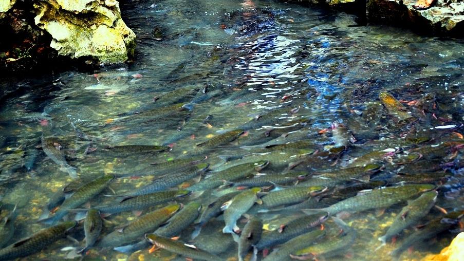 Suối cá thần cẩm thủy thanh hóa