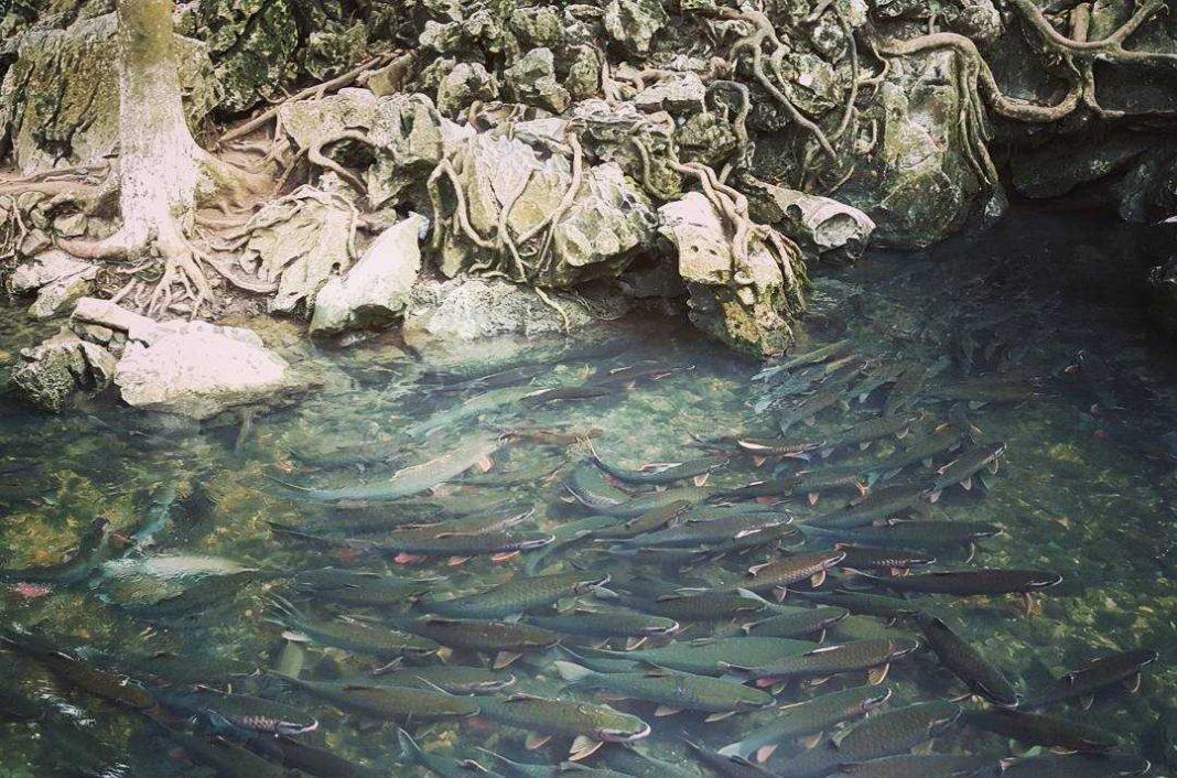 suối cá thần cẩm thủy